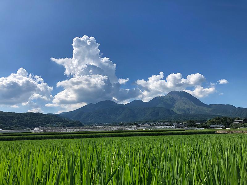 中尾大輔「山と空、そして輝く稲」