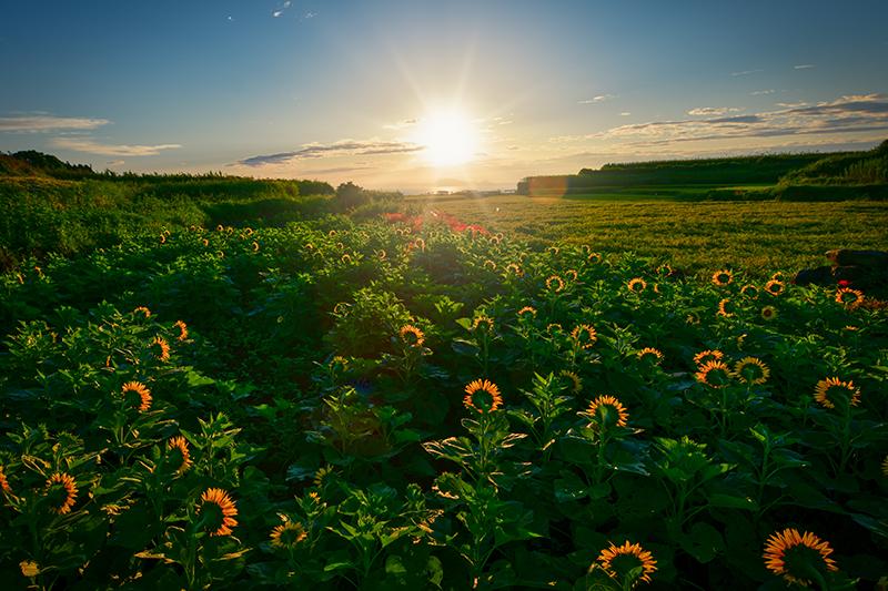 山本健一郎「陽はまた昇る」